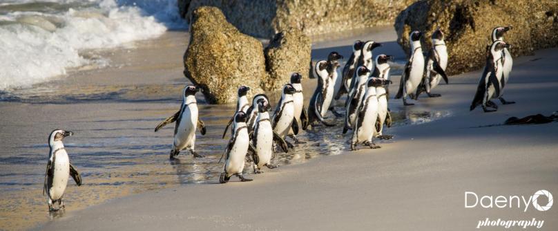 Boulders Penguin Colony