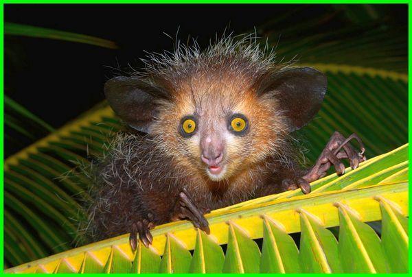 gambar hewan aneh lucu, gambar hewan aneh di dunia, gambar hewan aneh dan menyeramkan, gambar hewan aneh sedunia