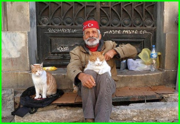 kucing dalam islam, nama kucing islami, kucing dalam islam adalah, kucing menurut agama islam, kucing di agama islam, kucing dalam ajaran islam, kucing bagi islam, keutamaan kucing bagi islam, memelihara kucing bagi islam, kucing dlm islam, kucing dan islam, kucing dimata islam, kucing di islam, memelihara kucing hukum islam, kucing dalam hukum islam