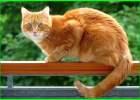 nama kucing cowok islam, nama kucing jantan islam, nama kucing laki-laki islam, nama kucing dalam islam, nama kucing dalam islam dan artinya, nama kucing dlm islam, nama kucing dalam islam jantan, nama kucing ikut islam, nama kucing islam yg bagus, nama nama kucing islam beserta artinya