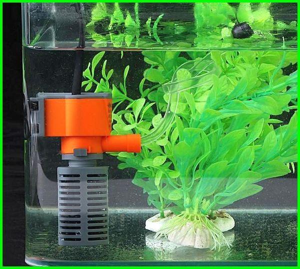 pompa udara aquarium tidak berisik, pompa udara aquarium tanpa listrik, fungsi pompa udara aquarium, cara kerja pompa udara aquarium, membuat pompa udara aquarium, fungsi pompa udara dalam aquarium, apa fungsi pompa udara di dalam akuarium, jenis pompa udara aquarium, manfaat pompa udara aquarium, fungsi pompa udara pada akuarium, pompa udara untuk aquarium, pompa udara aquarium, pompa udara aquarium yang bagus