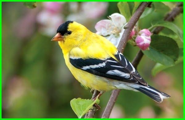 aneka macam burung kecil, jenis burung kecil cantik, kicau semua jenis burung kecil, jenis burung kecil dan namanya, macam2 burung kecil, macam macam burung kecil, macam-macam burung kecil, poto burung kecil, foto burung kecil berkicau, macam macam burung kecil hutan, jenis burung kecil mahal
