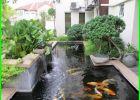 warna kolam ikan koi, bentuk kolam ikan koi yang ideal, kolam ikan koi yang sehat, kolam ikan koi terindah, kolam ikan koi yg bagus, kolam ikan koi yg baik, kolam yang cocok untuk ikan koi, kedalaman kolam ikan koi yang ideal, kolam minimalis ikan koi, kolam ikan koi modern