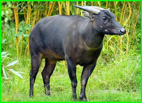 hewan langka di indonesia yang terdapat, hewan dan tumbuhan langka indonesia, wikipedia hewan langka di indonesia, ,hewan langka di indonesia yang dilindungi, 10 hewan langka di indonesia dan asal daerahnya, 10 hewan langka di indonesia beserta asalnya, 15 hewan langka di indonesia dan asalnya, 10 hewan langka di indonesia beserta habitatnya, 10 hewan langka di indonesia dan daerah asalnya