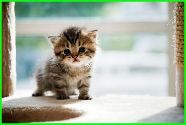 tips merawat kucing tanpa induk, tips merawat anak kucing tanpa induk, tips merawat bayi kucing tanpa induk, makanan untuk kucing tanpa induk, makanan untuk bayi kucing tanpa induk, makanan untuk anak kucing tanpa induk, makanan kucing 1 bulan tanpa induk, merawat kucing 1 bulan tanpa induk, anak kucing 1 bulan tanpa induk, cara merawat kucing 1 bulan tanpa induk, merawat anak kucing 1 bulan tanpa induk, merawat kucing 2 bulan tanpa induk, cara merawat kucing 2 bulan tanpa induk, merawat anak kucing 2 bulan tanpa induk, merawat kucing 3 bulan tanpa induk