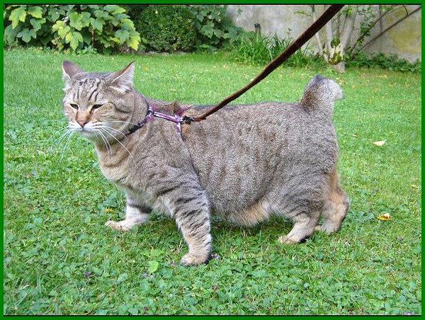 jenis2 kucing besar, jenis kucing ras besar, ras kucing besar, jenis kucing tulang besar, tipe kucing besar, jenis kucing ukuran besar, jenis kucing dengan ukuran besar, jenis kucing yang besar, jenis kucing yg besar, jenis kucing peliharaan yang besar