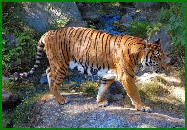 hewan nasional negara asean dan karakteristiknya, hewan nasional negara asia tenggara, hewan nasional 10 negara asean, hewan nasional di negara asean, hewan nasional sepuluh negara asean