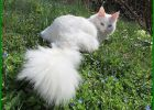 jenis jenis kucing cantik, jenis kucing tercantik, jenis kucing lucu di indonesia, jenis kucing kucing, jenis kucing yang imut, jenis kucing terindah, jenis kucing bagus, jenis kucing dan foto, jenis jenis kucing yang cantik, jenis jenis kucing imut, 10 jenis kucing, jenis kucing favorit, jenis kucing paling jinak, jenis kucing terbagus, beberapa jenis kucing