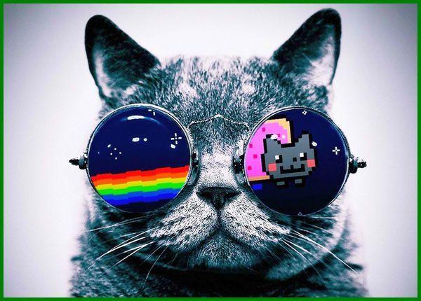 nama kucing cowok yang keren, nama kucing jantan berdasarkan warna, nama kucing cowok dan artinya, nama kucing cowok, nama kucing cowok bagus, nama-nama kucing cowok, nama nama kucing cowok, nama kucing cowo, nama.kucing cowo, nama kucing cowo yg bagus, nama nama kucing cowo, nama kucing cowok yg bagus, nama kucing laki2, nama nama kucing laki2, nama kucing cowok yang bagus