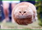 nama kucing korea lucu, nama kucing lucu ala korea, nama lucu kucing korea, nama lucu untuk kucing korea, nama kucing lucu korea, nama kucing korea yang bagus, nama kucing lucu di korea, nama kucing korea jantan, nama kucing korea, nama-nama kucing korea