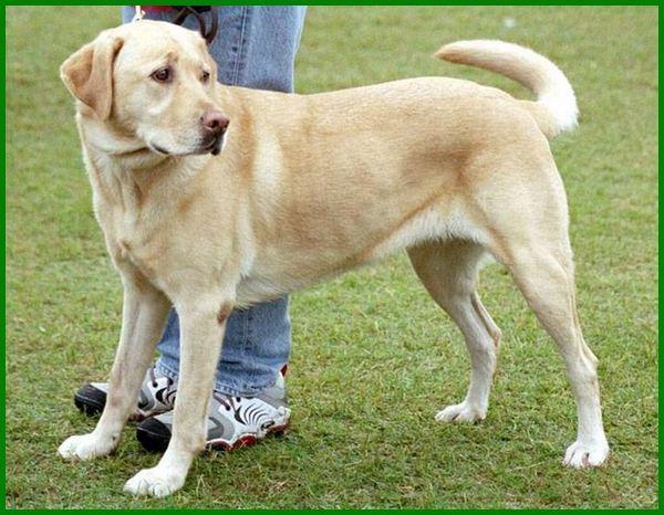 anjing yang paling bagus, anjing apa yang bagus untuk dipelihara, apa nama anjing yang bagus, apa nama anjing yang paling bagus, cara memilih anjing yang bagus, nama anjing yang bagus, siapa nama anjing yang bagus