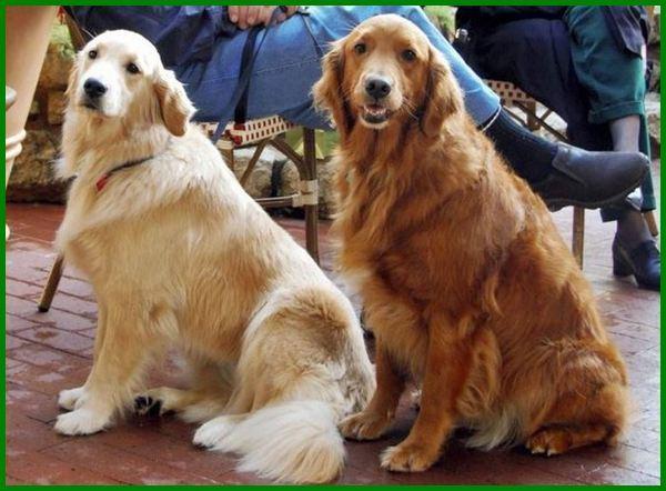 anjing yang paling bagus, anjing apa yang bagus untuk dipelihara, apa nama anjing yang bagus, anjing apa yang paling bagus, apa nama anjing yang paling bagus
