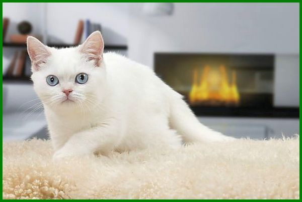 cara penjagaan anak kucing 4 bulan, cara merawat kucing umur 4 bulan, cara memandikan kucing umur 4 bulan, cara merawat kucing persia 4 bulan, cara merawat kucing himalaya 4 bulan, cara merawat kucing 4 bulan, cara merawat anak kucing 4 bulan