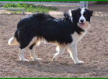 anjing berliur berlebihan, penyebab anjing berliur, mengapa anjing berliur, berliur