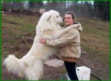 jenis anjing paling setia, jenis anjing paling setia di dunia, jenis anjing yang setia pada pemiliknya, jenis anjing yg setia, jenis anjing yg paling setia, jenis anjing yang paling setia, jenis anjing yang pintar dan setia, jenis anjing yang paling setia dengan tuannya, jenis anjing pintar dan setia, anjing yang setia, anjing yg setia