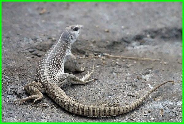 contoh hewan padang pasir, hewan yang hidup di padang pasir adalah, hewan yang ada di padang pasir, ciri khusus hewan padang pasir, hewan di padang pasir, hewan yang hidup di padang pasir tts, gambar hewan di padang pasir, binatang di padang pasir, hewan hidup di padang pasir