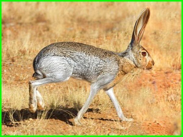 yang termasuk hewan ekosistem gurun adalah, hewan di gurun, hewan yang hidup di gurun, hewan yang dapat beradaptasi dengan iklim gurun, hewan yang dapat beradaptasi dengan iklim gurun diantaranya brainly, hewan yang menyesuaikan diri dengan lingkungan gurun, hewan yang mampu menyesuaikan diri dengan lingkungan gurun adalah, hewan dan tumbuhan yang hidup di gurun pasir, ciri ciri hewan yang hidup di gurun pasir, hewan yang tinggal di gurun, 2 jenis hewan yang ada di bioma gurun pasir adalah