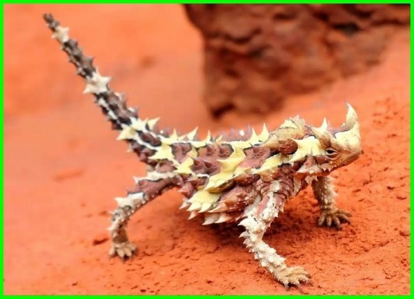 hewan di gurun pasir, hewan hidup di gurun pasir, hewan yang ada di gurun pasir, hewan gurun sahara, hewan di padang pasir, gambar hewan gurun pasir, hewan yang hidup di gurun pasir, binatang di gurun pasir, daftar nama hewan gurun pasir