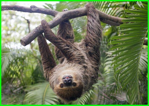 jenis hewan yg hidup di pohon, hewan yang hidup di pohon kelapa, sebutan hewan yg hidup di pohon tts