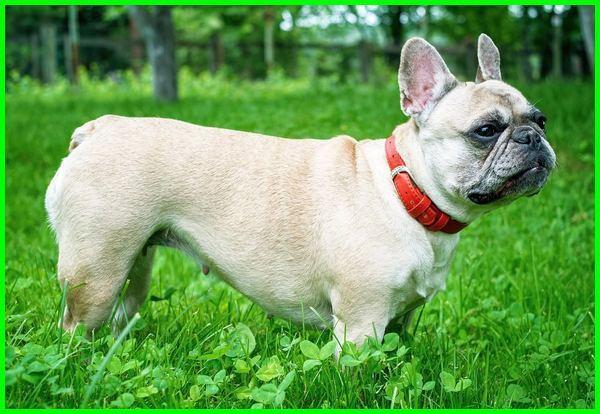 macam jenis anjing peliharaan, macam-macam anjing peliharaan yang lucu, macam macam anjing kecil peliharaan, jenis anjing peliharaan yg baik, jenis anjing peliharaan di indonesia, jenis anjing peliharaan di rumah, jenis anjing peliharaan dan namanya, macam macam anjing peliharaan, macam macam anjing, jenis anjing peliharaan yang jinak