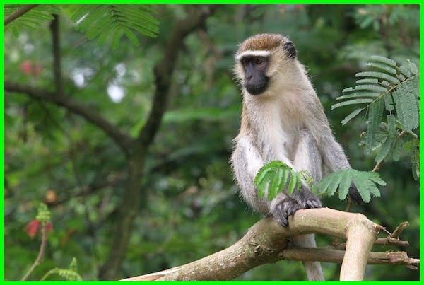 hewan yang hidup pohon, hewan yang hidup di pohon, hewan yang hidup diatas pohon disebut