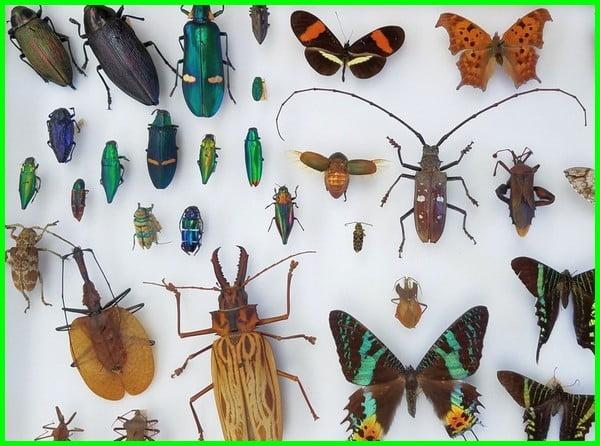 gambar serangga untuk anak tk, gambar serangga dan namanya, gambar aneka serangga, gambar serangga beserta fungsinya, gambar serangga berkaki 6, contoh gambar serangga, gambar serangga dan ciri-cirinya, nama dan gambar serangga, gambar-gambar serangga, gambar gambar serangga