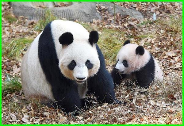 hewan lucu di dunia ini, hewan paling lucu di dunia, dunia hewan lucu, hewan lucu yang ada di dunia, hewan aneh lucu di dunia, hewan hewan lucu di dunia, hewan di dunia lucu, hewan lucu seluruh dunia, dp hewan lucu, hewan ter lucu di dunia, hewan yang lucu di dunia, hewan lucu di dunia