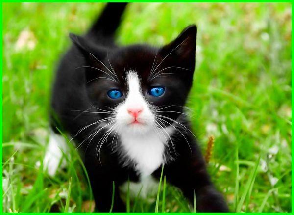 kucing mata biru, Kucing Ojos azules, ras kucing bermata biru,kucing bermata biru , jenis kucing warna putih mata biru, jenis kucing bermata biru kuning, jenis kucing bermata biru, ras kucing mata biru, jenis kucing yang bermata biru, jenis jenis kucing mata biru, kucing mata biru, ras kucing bermata biru, kucing bermata biru, jenis kucing bermata biru cantik