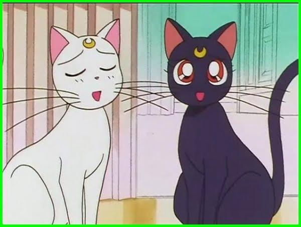 Kucing di film anime Sailor Moon, nama nama kucing di anime, nama kucing anime, nama kucing dari anime