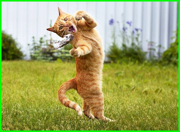 kucing oren barbar, kucing oren lucu, kucing oren meme, kucing oren putih, kucing oren viral, foto kucing oren barbar, kucing oren kampung, foto kucing oren lucu, nama kucing warna oren, kucing oren