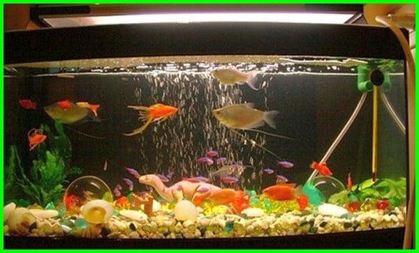 gambar ikan dalam akuarium