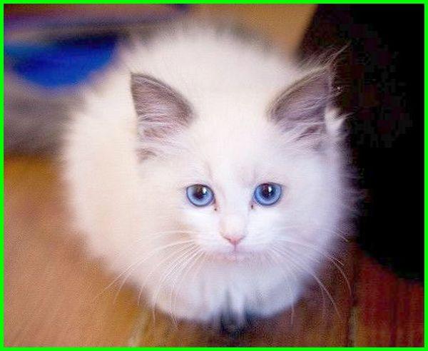 mimpi anak kucing banyak, mimpi digigit anak kucing, mimpi dikasih anak kucing, mimpi anak kucing mati, mimpi anak kucing baru lahir, mimpi nemu anak kucing, mimpi diikuti anak kucing, mimpi anak kucing masuk rumah, buku mimpi anak kucing