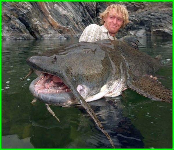 ikan lele terbesar, ikan lele ter besar, ikan lele terbesar di dunia, mancing ikan lele terbesar di dunia, lomba mancing ikan lele terbesar, ikan lele yang besar, ikan lele terbesar di indonesia, ikan lele besar sekali, mancing ikan lele terbesar, ikan lele yang terbesar di dunia