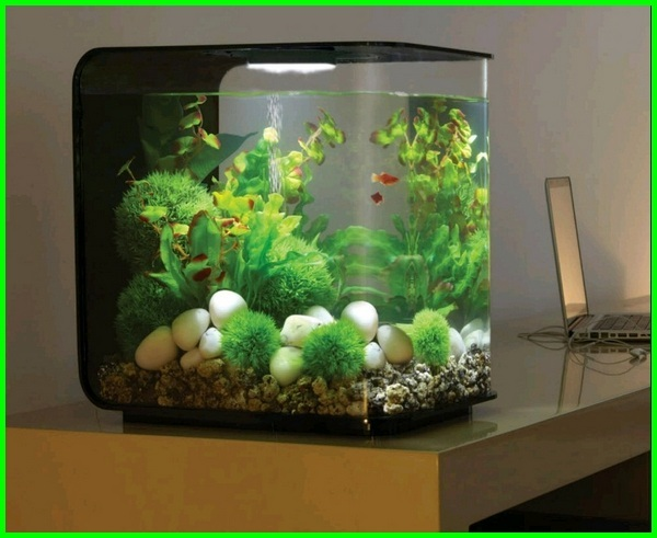 akuarium kecil, akuarium kecil untuk di kamar, ikan hias aquarium kecil, akuarium kecil untuk ikan cupang, hias aquarium kecil, aquarium kecil keren, aquarium kecil cantik, akuarium kecil untuk di kamar, aquarium mini di kamar tidur