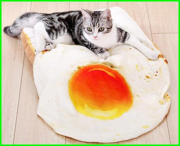 manfaat kucing makan kuning telur, kucing makan telur kuning, kucing makan telur matang, makanan kucing kuning telur, kuning telur untuk kucing, manfaat kuning telur untuk kucing, telur kucing, cara membuat makanan kucing dari telur, bahaya kuning telur untuk kucing, cara membuat makanan kucing dari tempe dan telur, telur untuk kucing, kuning telur mentah untuk kucing, putih telur untuk kucing, kucing makan kuning telur
