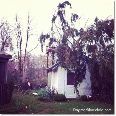 Hurricane Sandy damage, tree on garden house