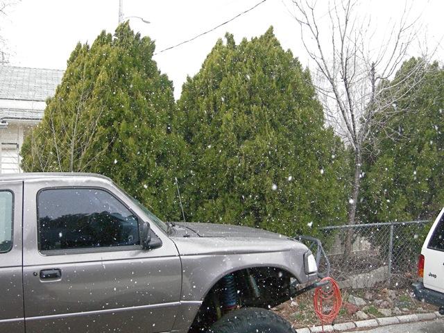 snowy-1.jpg