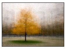 A tree turning colour in front of the University of Toronto's Engineering Building: an example of the photo impressionism technique in the round