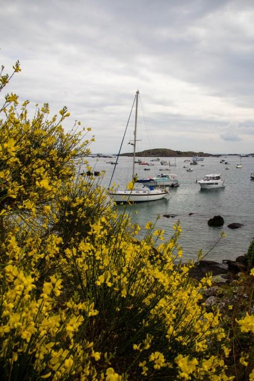 Vue sur les bateaux au mouillage, à travers des fleurs.