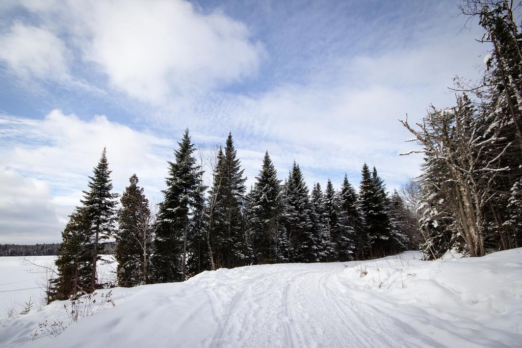 Chemin vers des arbres enneigés sur le Sentier des Caps.
