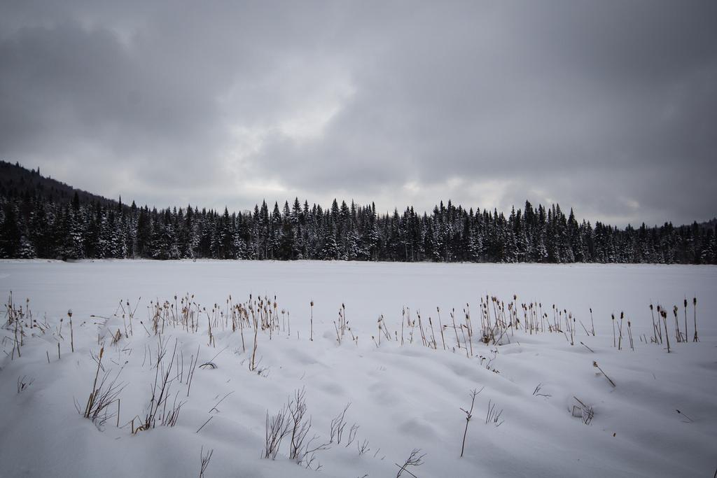 Lac gelé et forêt enneigée sur le Sentier des Caps.