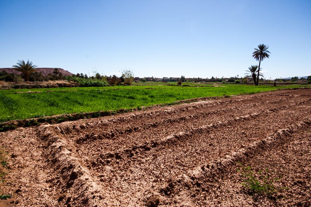Champs cultivés au coeur d'une oasis, en plein désert.