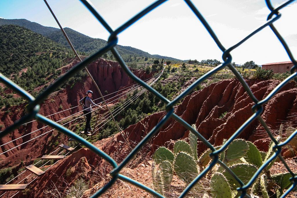 Terre rouge, arbres verts profonds et pont de singe.