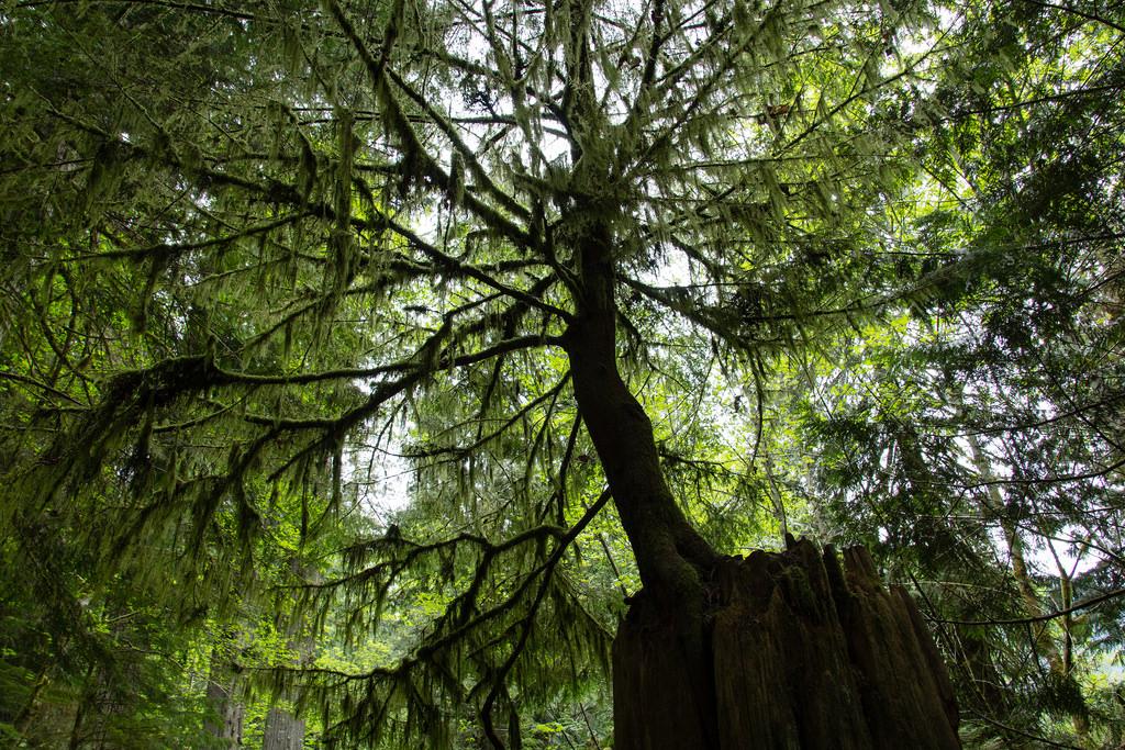 Quand un arbre pousse sur un autre.