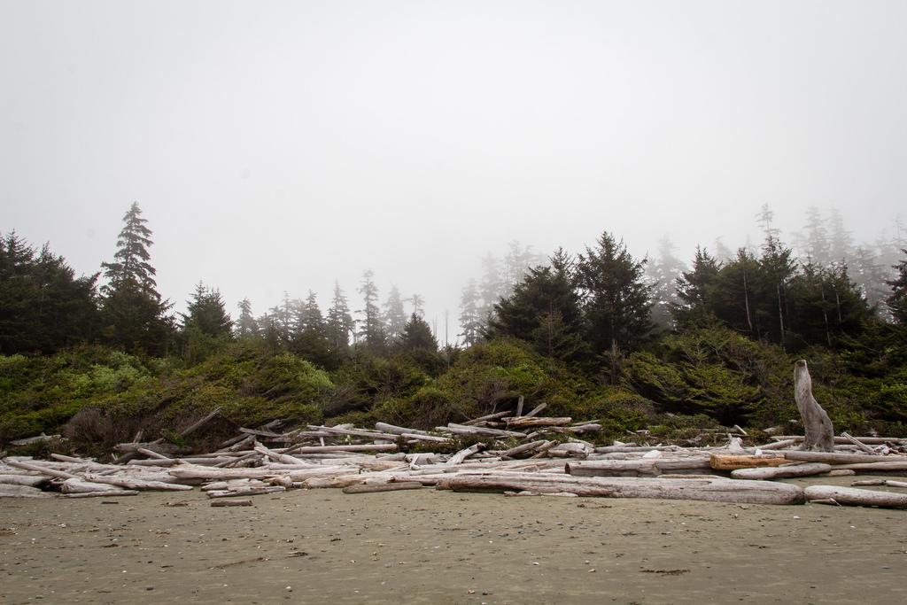 Plage et bois flotté dans la brume.