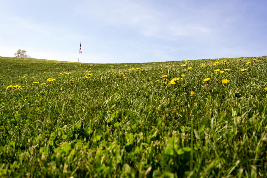Pelouse fleurie et drapeau américain, Portland Maine.
