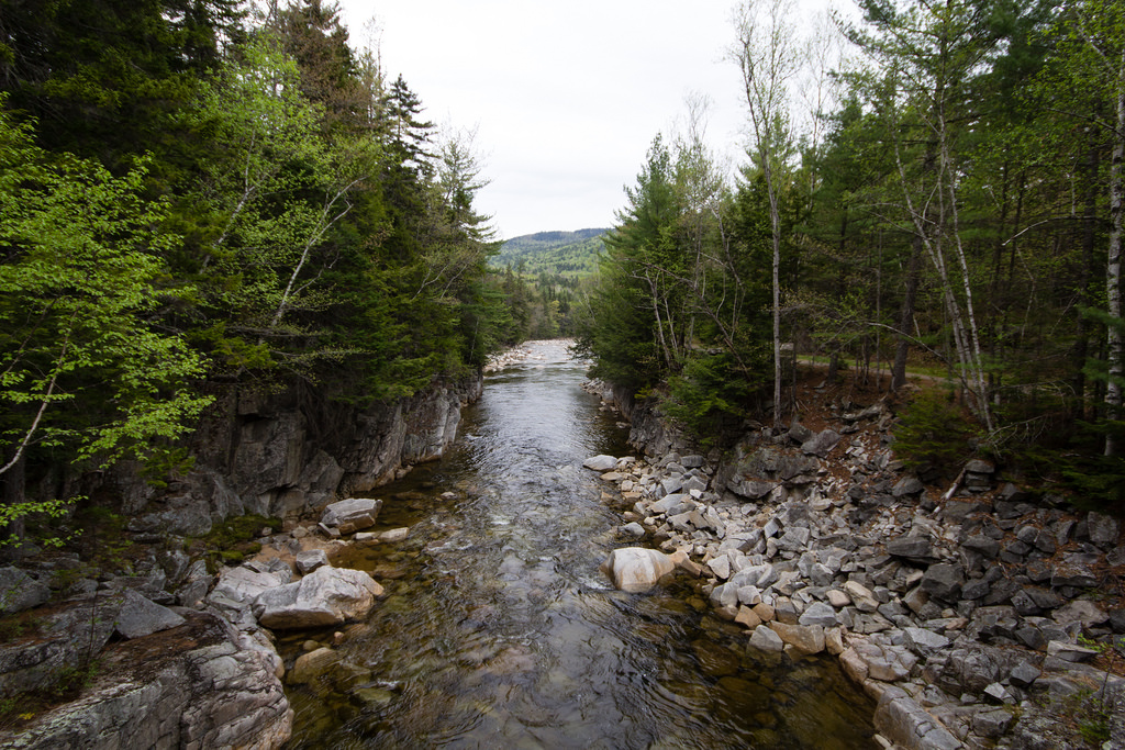 Rivière au coeur de la forêt des White Mountains.