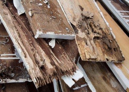 termites-pest-control-mareeba