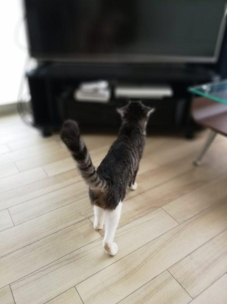 ファーウェイP10で撮った猫の写真
