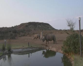 rhino_vis_ir2
